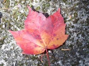fall leaf against lichen & granite
