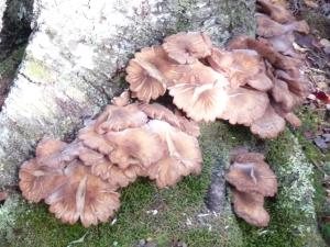 funghi6