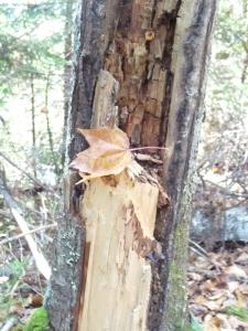 leaf caught in tree